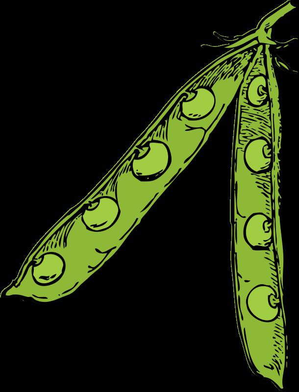 Clipart Pea Pod Color