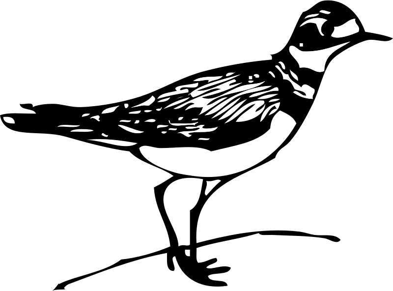 Killdeer by johnny_automatic - A drawing of the bird known as the killdeer.
