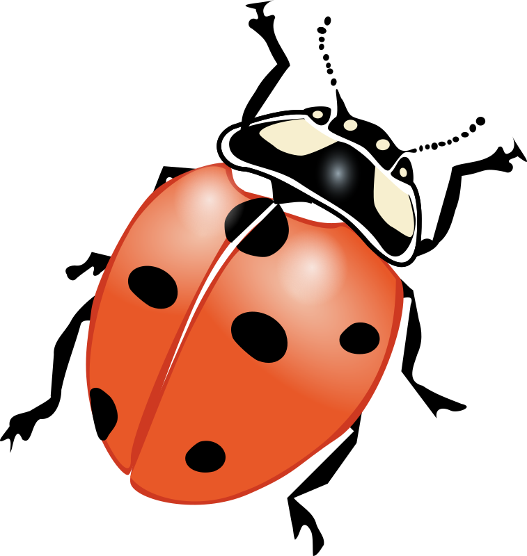 ladybug by mekonee_29 - A ladybug viewed from the top.