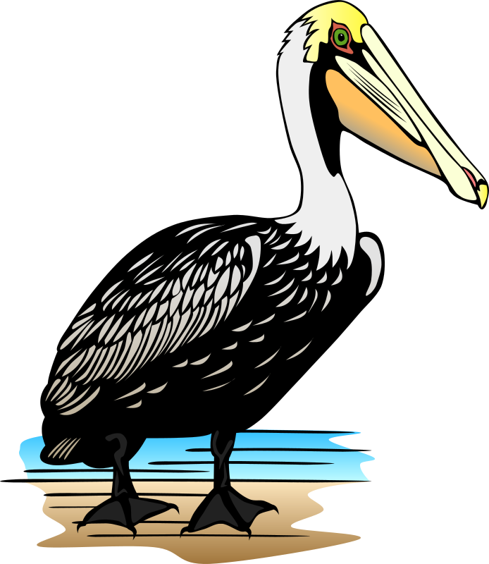 Pelican by Gerald_G - A line art drawing by Bob Hines for the US Fish and Wildlife Service.