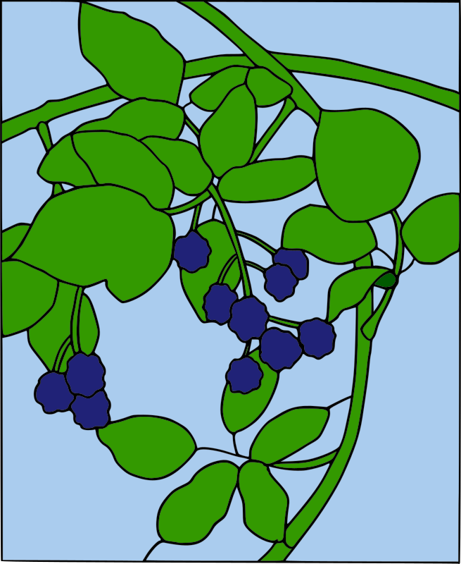 https://openclipart.org/image/800px/svg_to_png/210996/warszawianka_Blackberry_motif1.png
