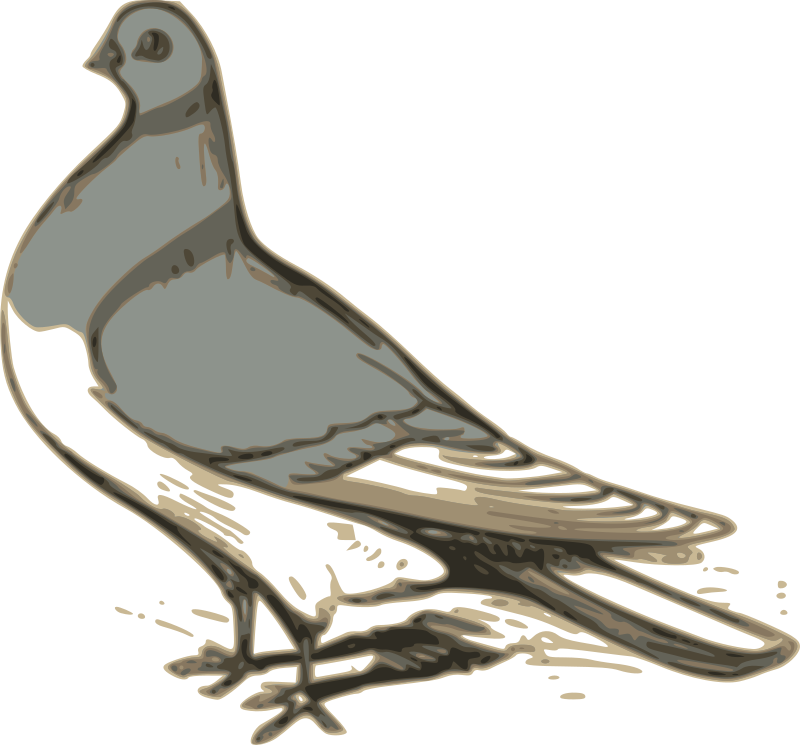 pigeon illustration by ossidiana - from http://www.gutenberg.org/ebooks/24644