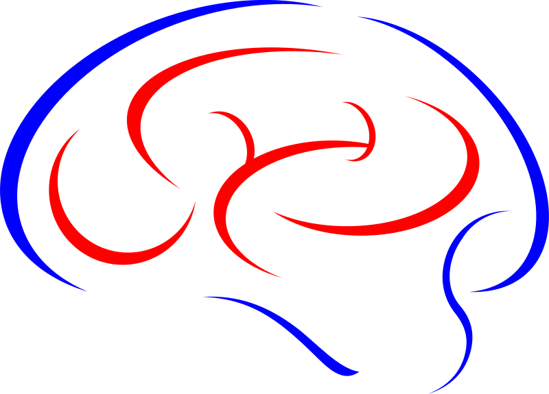 https://openclipart.org/image/800px/svg_to_png/213886/Brain-color.png