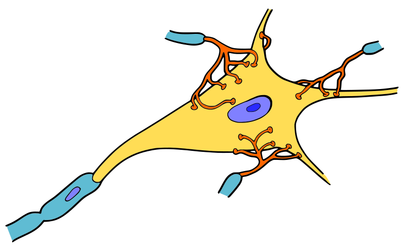 https://openclipart.org/image/800px/svg_to_png/214551/neurone.png