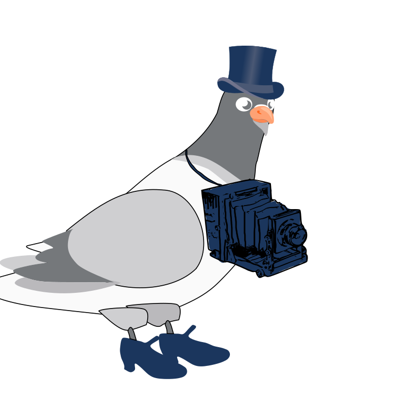 https://openclipart.org/image/800px/svg_to_png/214942/pigeon4.png
