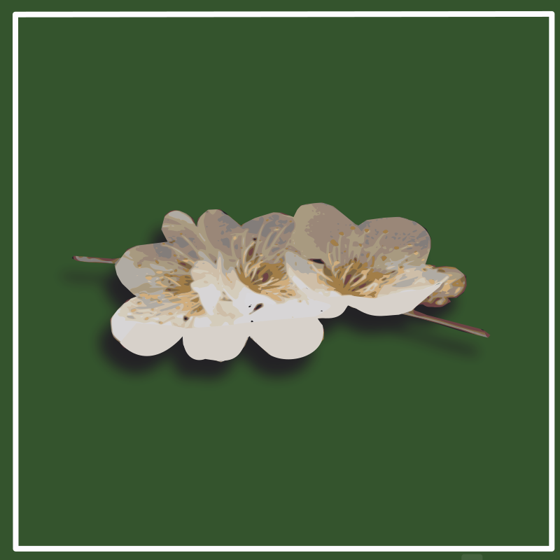 https://openclipart.org/image/800px/svg_to_png/216167/plum-blossom.png