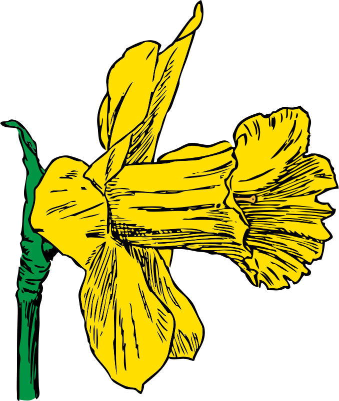 daffodil by johnny_automatic - Harmsworth's