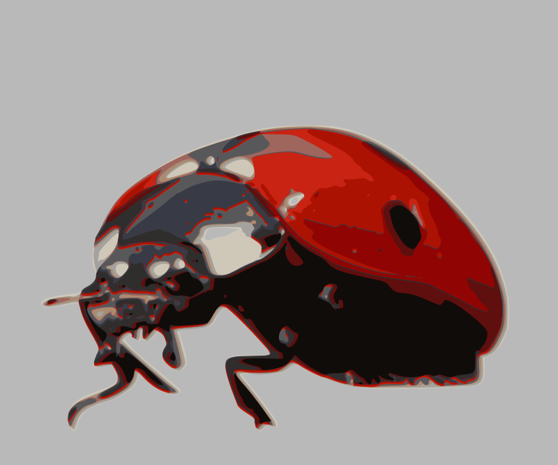 https://openclipart.org/image/800px/svg_to_png/217182/ladybird-beetle.png