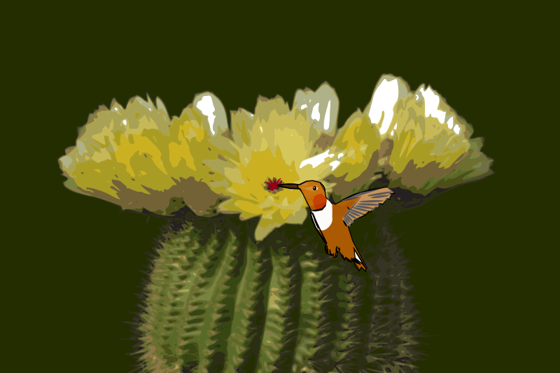 https://openclipart.org/image/800px/svg_to_png/217286/Cactus-hummingbird.png