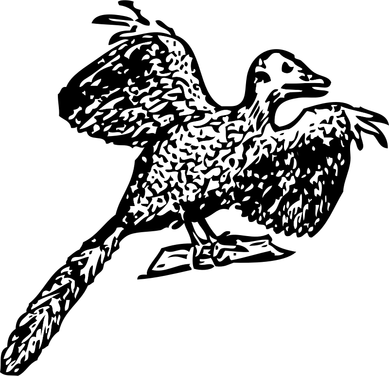 Archaeopteryx by johnny_automatic - Harmsworth's