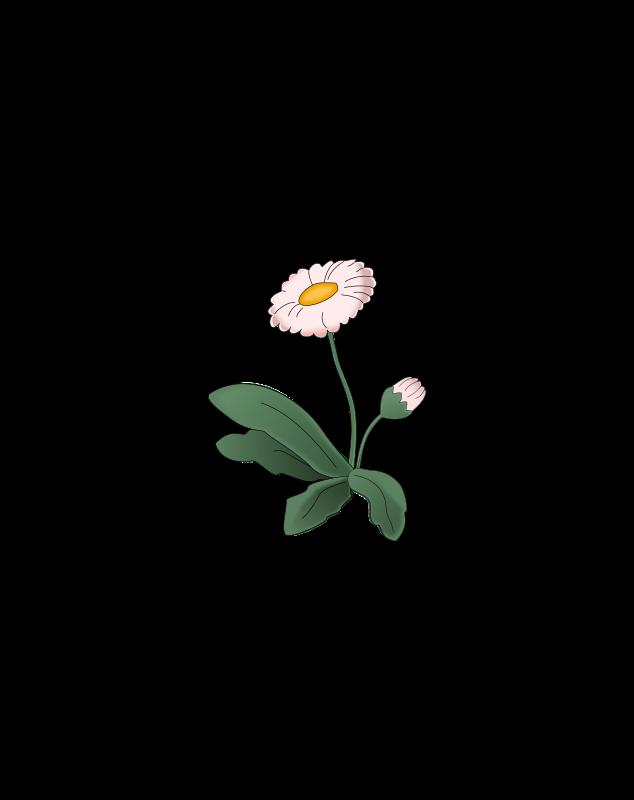Clipart - Flower Daisy