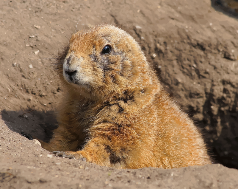 Clipart - Prairie Dog