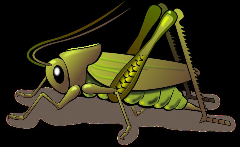 Clipart Grasshopper