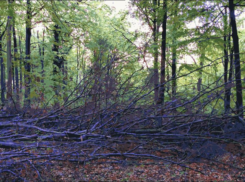 Clipart - Lichtscheid Forest Again