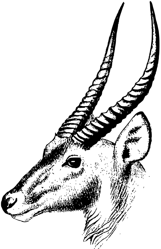 50a2f97ab3fc4b4ec20000df Dental Clinic Mmvarquitecto Image likewise Waterbuck likewise Samolepici Dekorace Na Zed Tulipany Pi 4174 furthermore Acc heholder besides Camera Nikon Slr. on detail