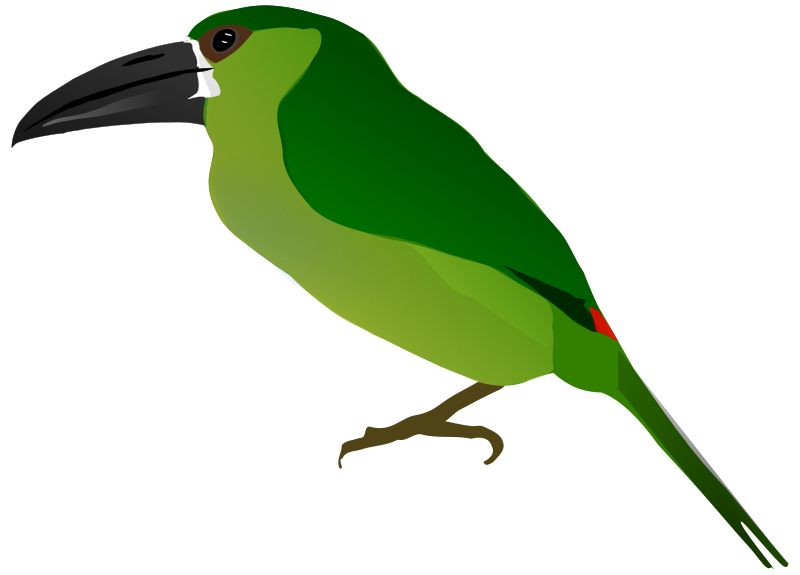 Clipart - Crimson-rumped Toucanet