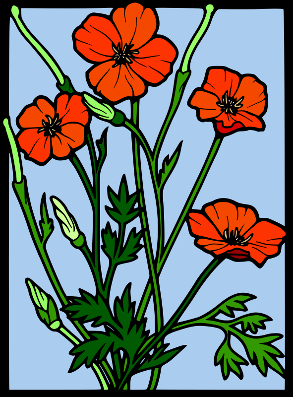 Coloured Poppy stained glass  by tom