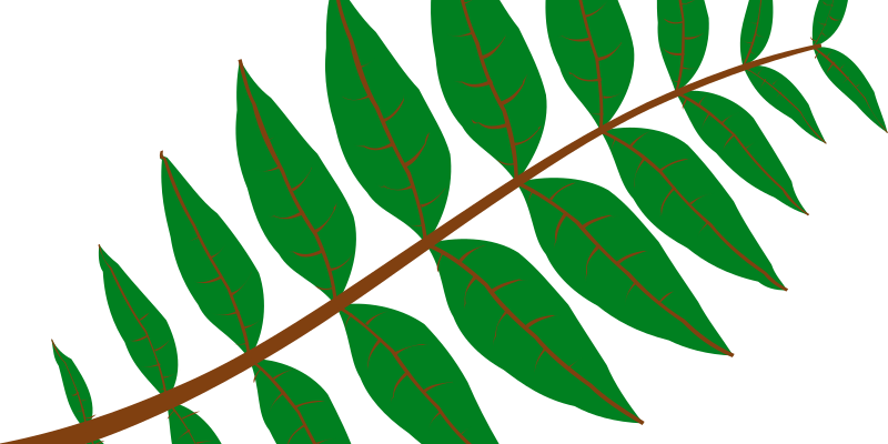 Pinnate Leaf by cemkalyoncu - This leaf is automatically generated, no modifications are made.