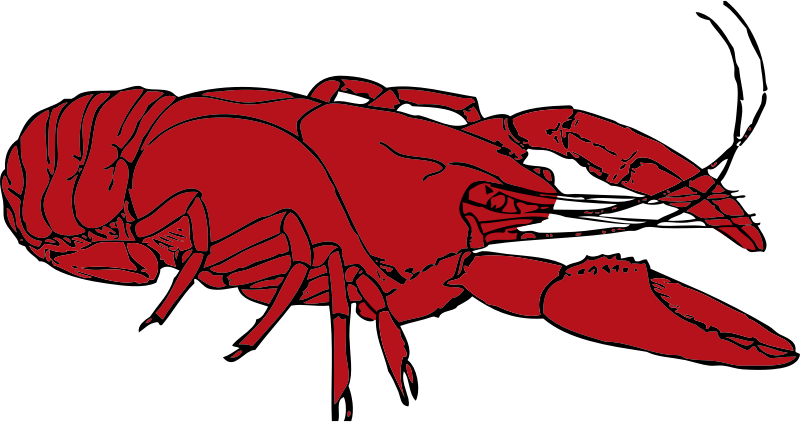 crayfish by johnny_automatic