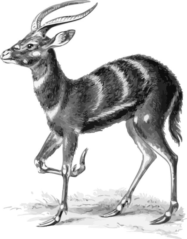 Sitatunga on haeckel