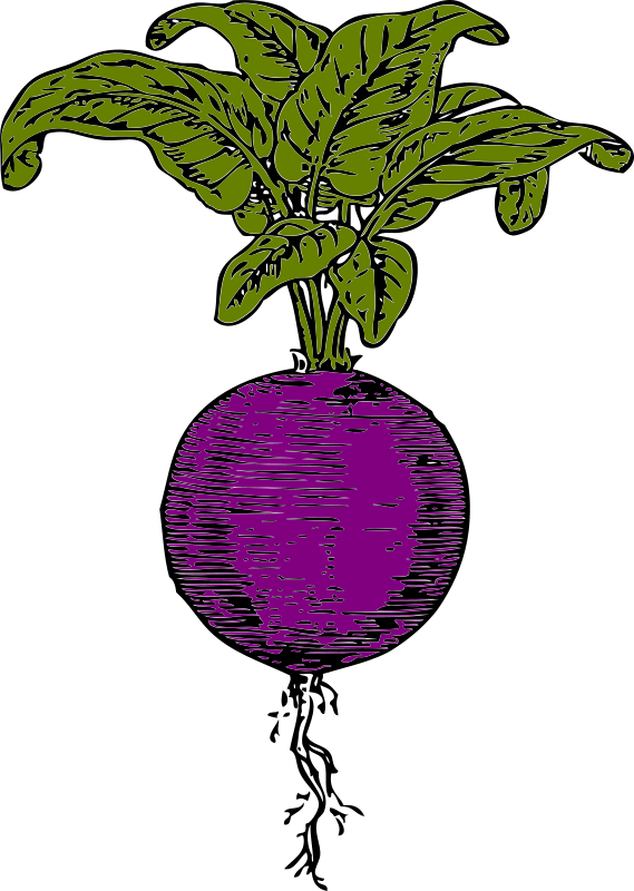 free clipart beets - photo #12