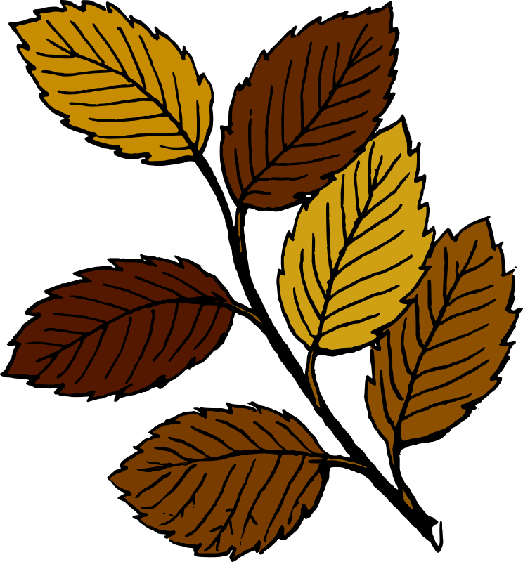 Autumn leaves on branch by tom