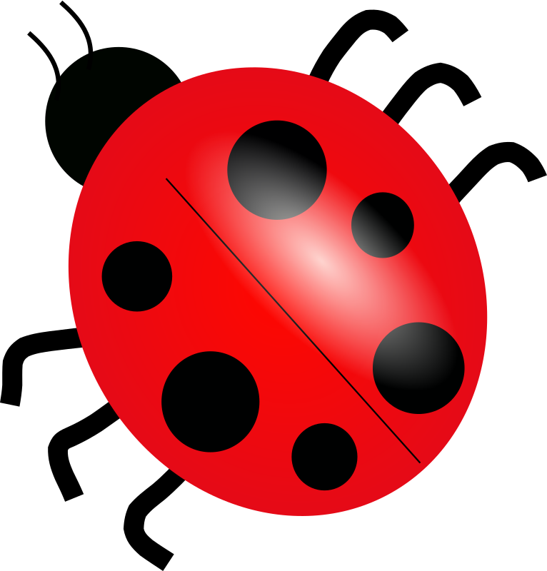 ladybug by Anonymous - A ladybug viewed from the top.