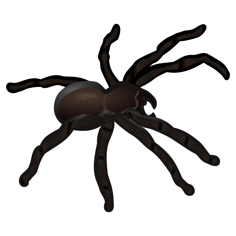 clipart spider - photo #39