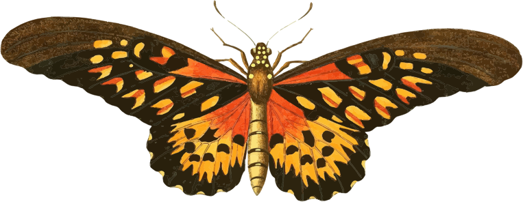 Clipart - Vintage Butterfly Illustration