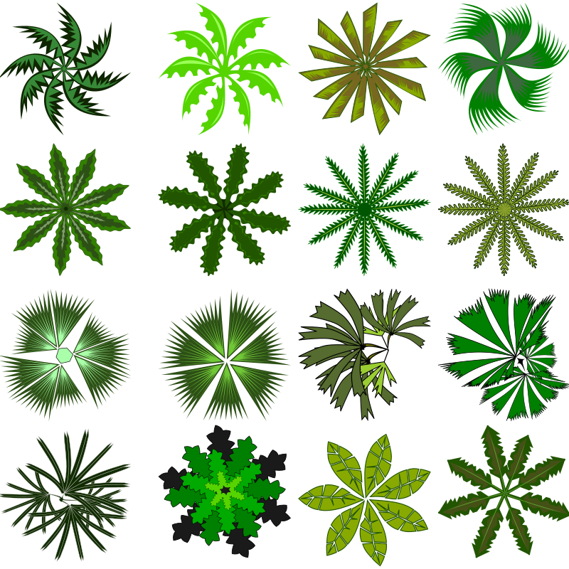 Clipart - Palm top view