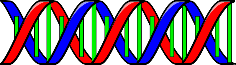 Double Helix (DNA) by Anonymous