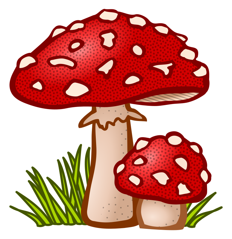 Clipart - toadstool - coloured