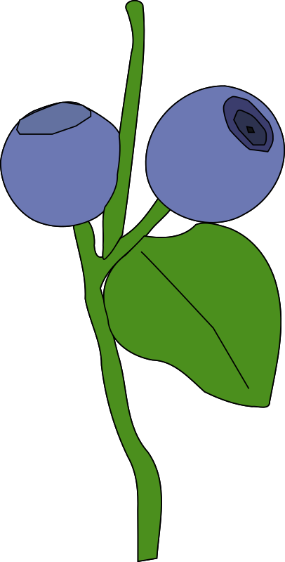 Clipart Blueberry