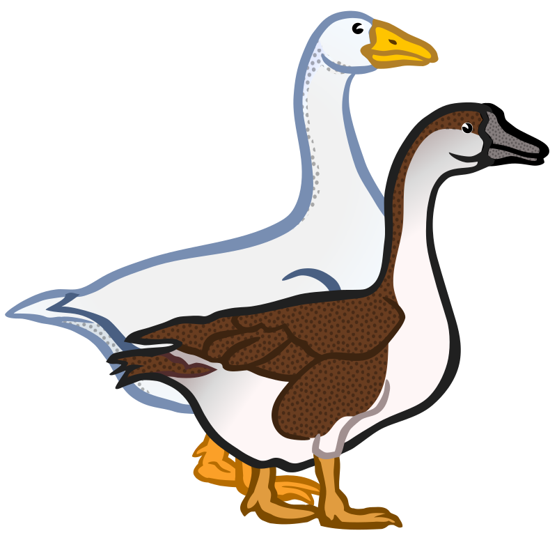 Clipart - geese - coloured