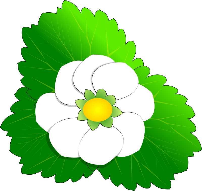Strawberry Flower by opensourcebear - A strawberry flower