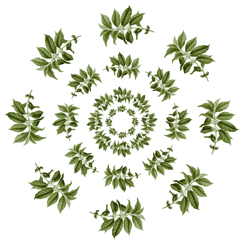 Clipart - coffee leaves-pattern