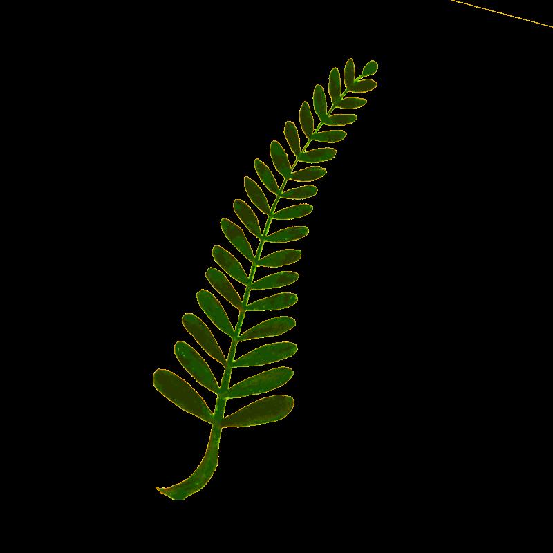 Clipart - Calligraphic Illustration- Leaf, Twig, Plant- 3