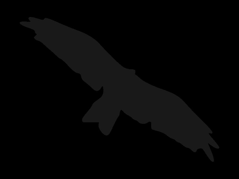 Clipart - kite(bird) silhouette