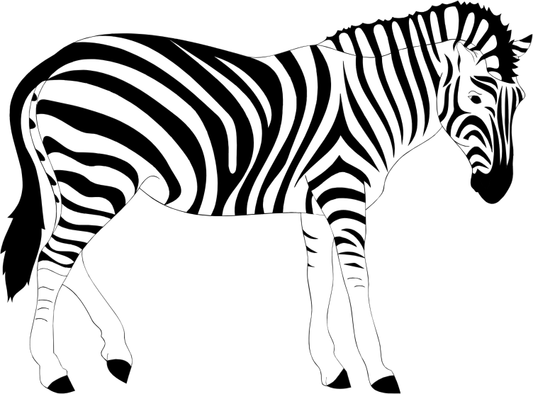 Line Drawing Zebra : Clipart realistic zebra illustration