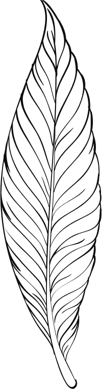 Line Art Feather : Clipart feather line art