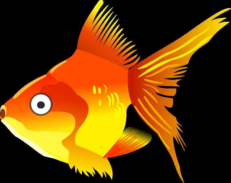 Tulpen Blumen Orange Blumenblatter Blatter likewise Silly Stuff likewise Clipart Orange Starfish 29925545 further Cartoon Tangerine as well Cartoon Goldfish. on orange cartoon pictures