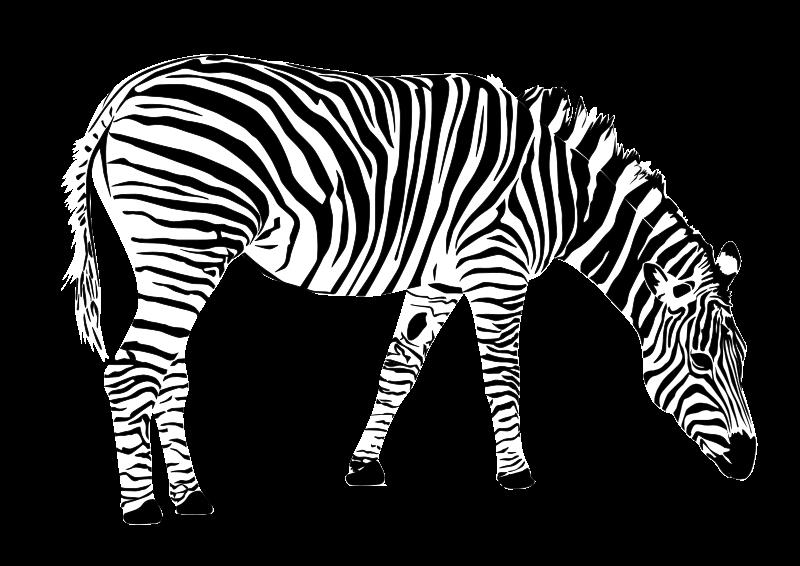 Line Art Zebra : Clipart zebra