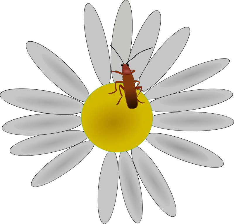 bug on a flower by Machovka - Bug on a flower.