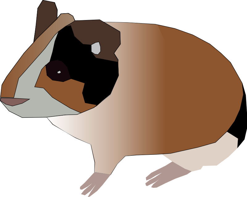 guinea pig by Machovka
