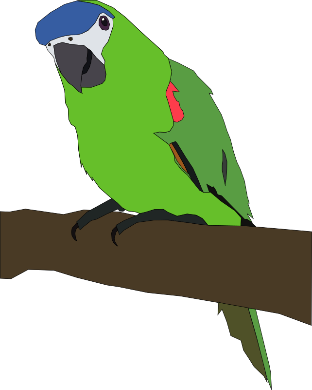 parrot by Machovka - A green parrot with a bleu-grey head