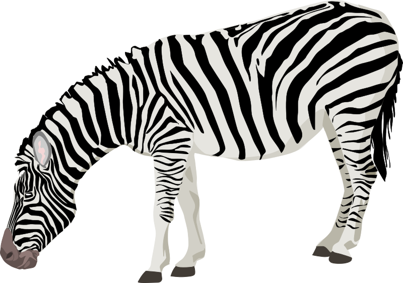 clipart zebra rh openclipart org