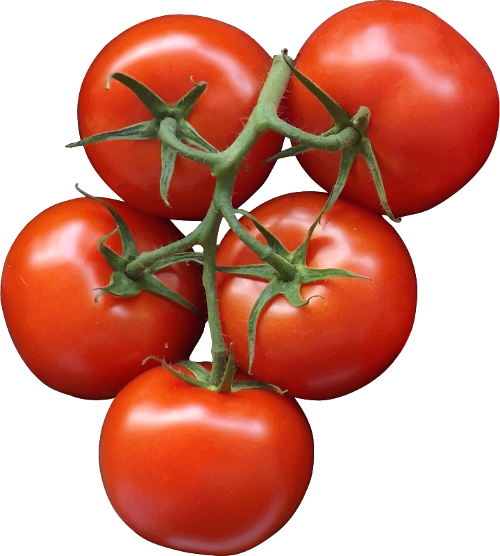 carrots love tomatoes pdf download