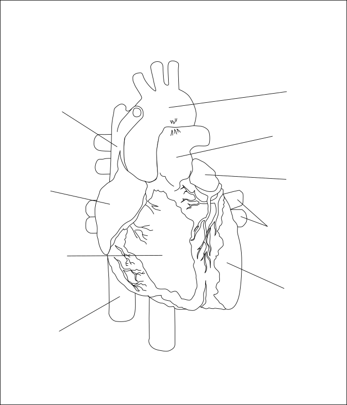 The Human Heart by kablam - Drawn in Inkscape by pencilsauce.com. The SVG file has the callouts on a seperate layer.