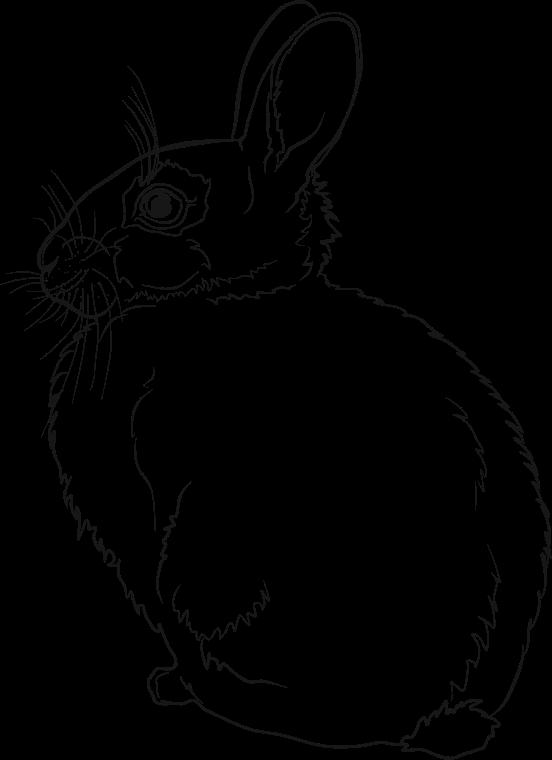Line Art Rabbit : Clipart rabbit line art