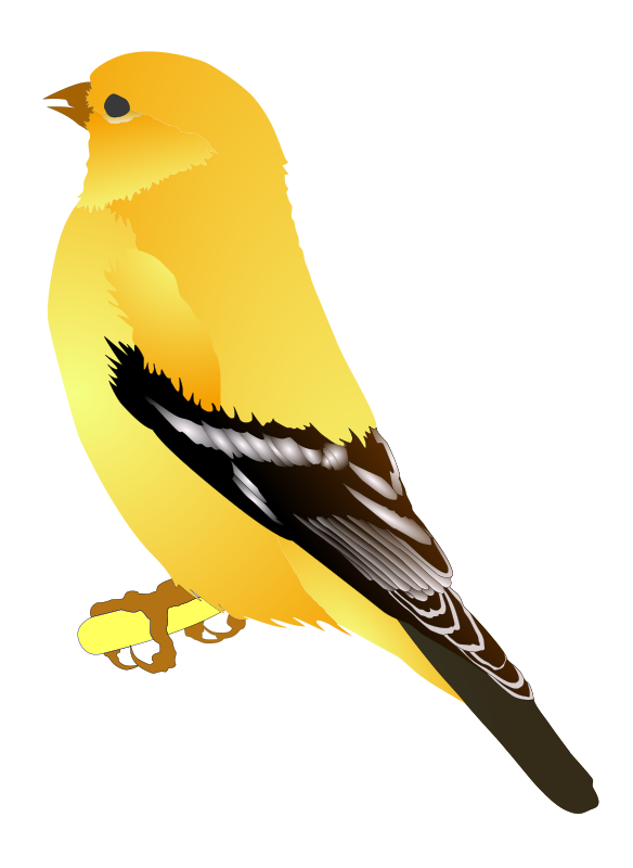Gold Finch by MichowwTru - I tryied to create a svg of a Goldfinch. This is from a photo I took.